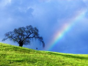 rainbow-blue-sky-nature