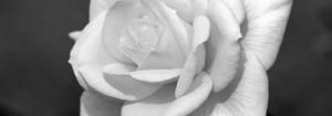 001_ROSE-1024x360